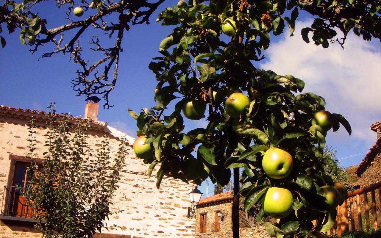 Variedad de manzana llamada pero